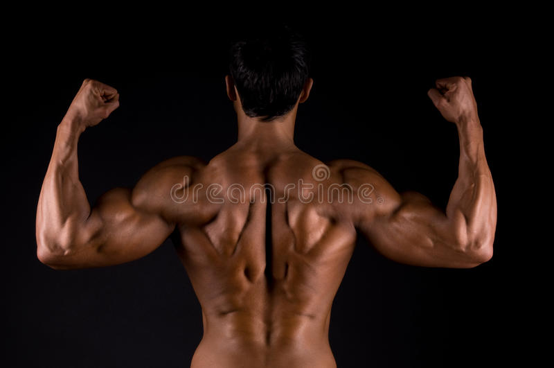 The male body. stock image