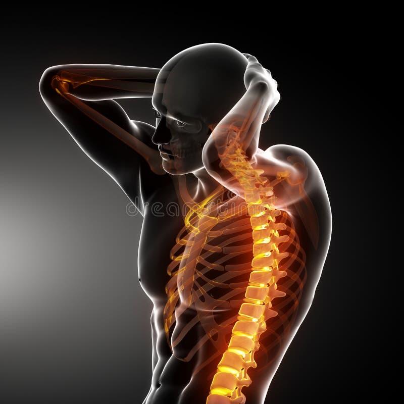 Male Body Backbone Scan stock illustration