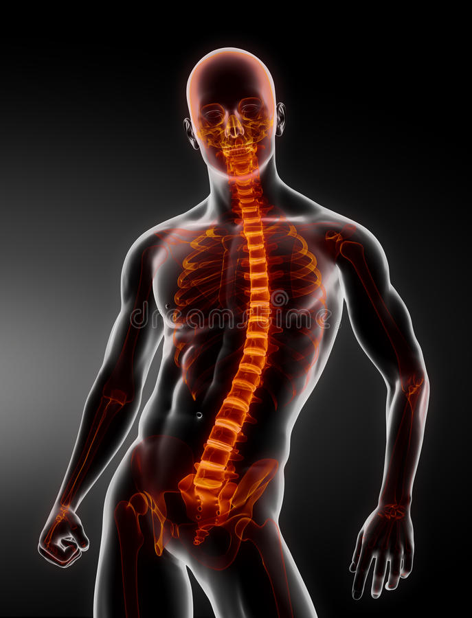 Male Body Backbone Scan stock illustration