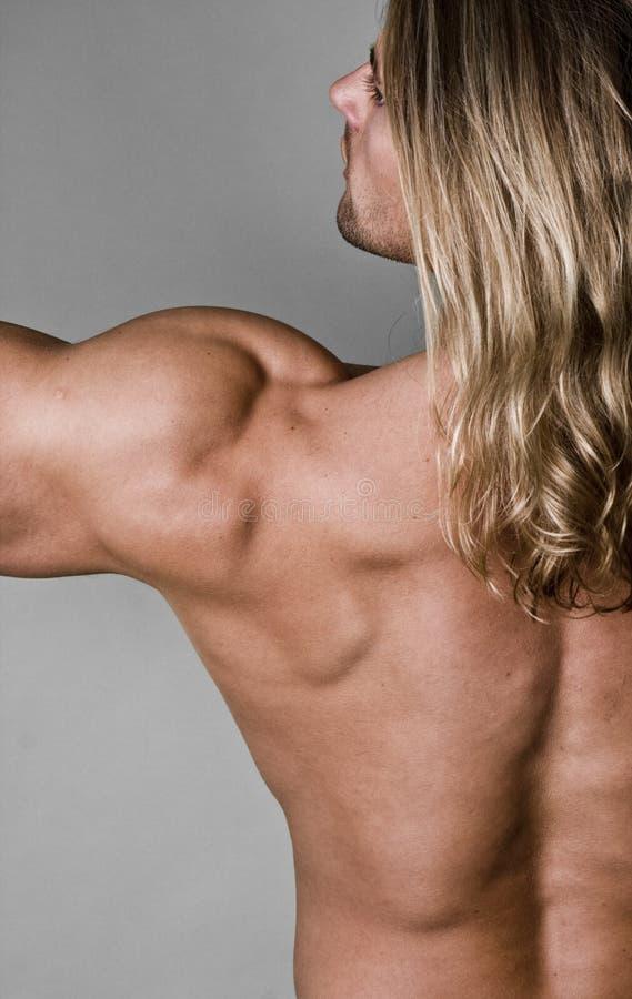 Free Male Body Builder Stock Photos - 10224933