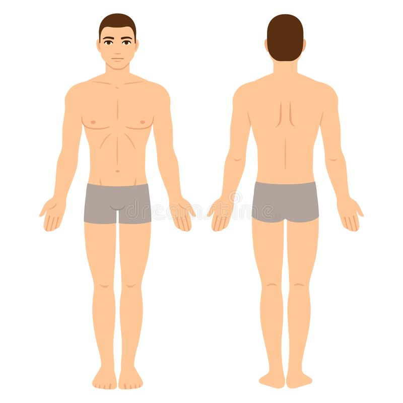 Male body front and back stock illustration