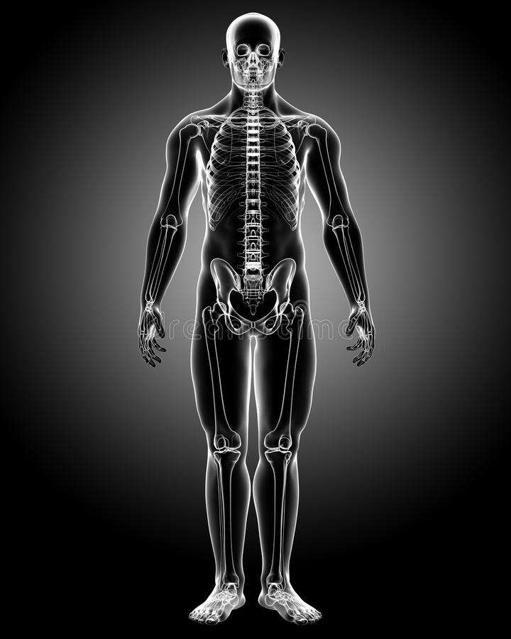Male body X-ray vector illustration