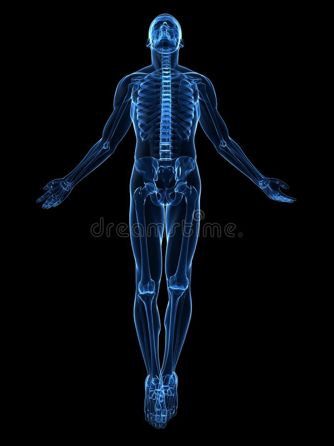 Male body rise stock illustration