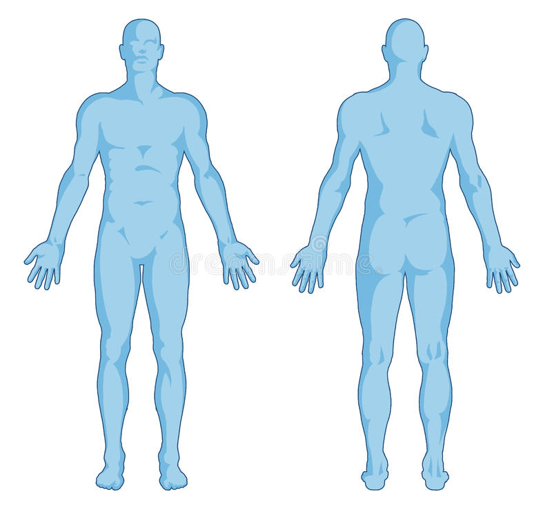 male body shapes - human body outline - posterior royalty free, Muscles