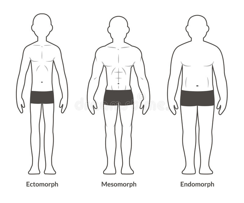 Male body type chart vector illustration