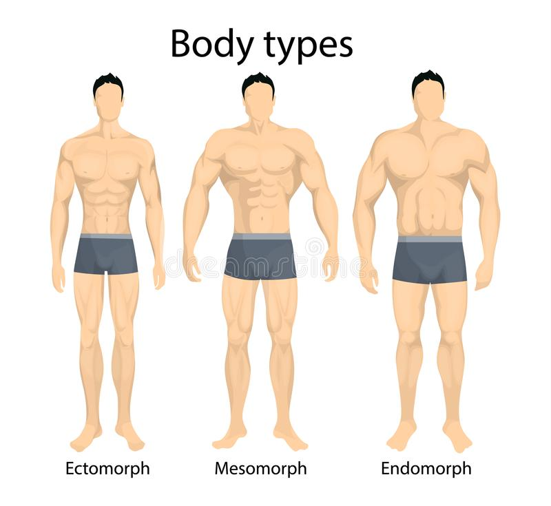 Male body types. royalty free illustration