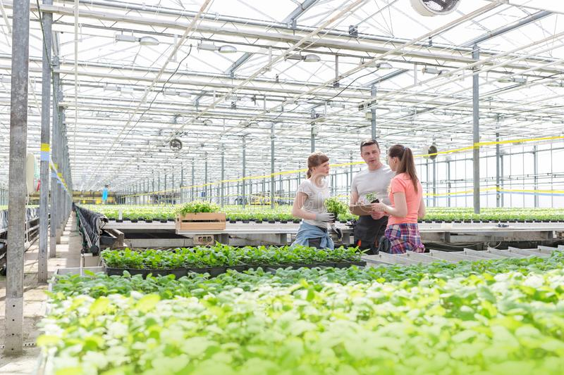 Male botanists discussing with female coworkers while standing amidst seedlings in greenhouse stock photos