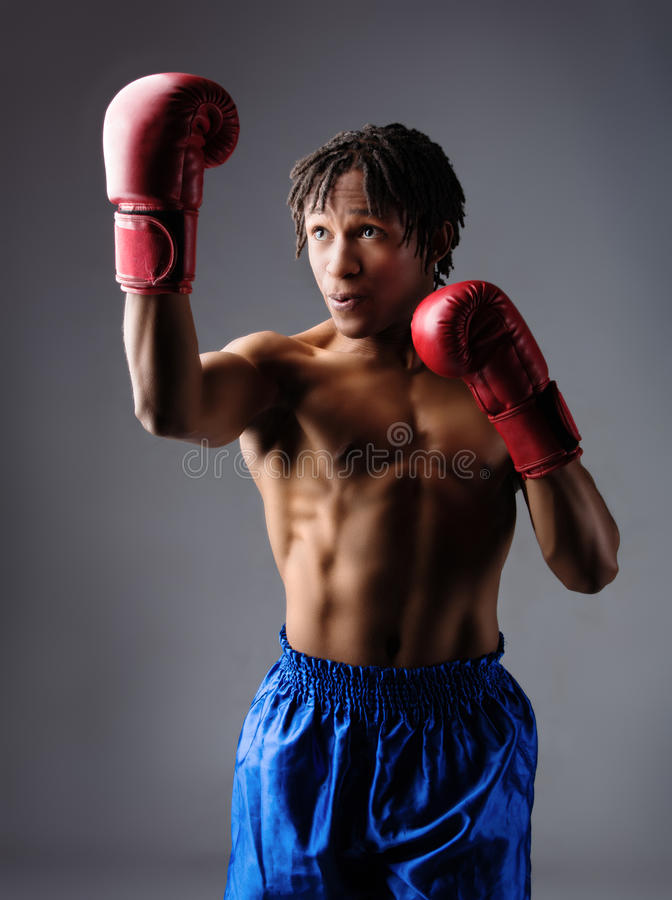 Male boxing fighter. Young muscular athletic male boxer wearing blue boxing shorts and red boxing gloves. Fighter is on a grey background royalty free stock photos