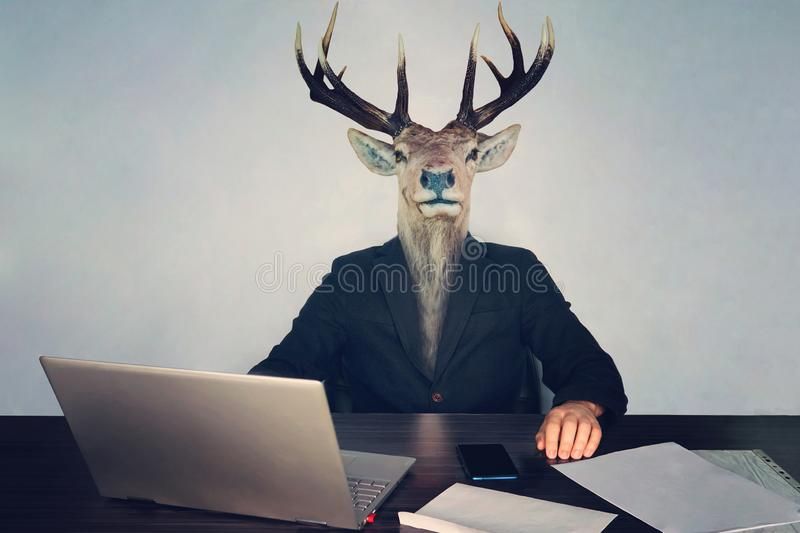 male business man with deer head on a blue background in the office at the Desk. concept of irrational management. stupid stock image