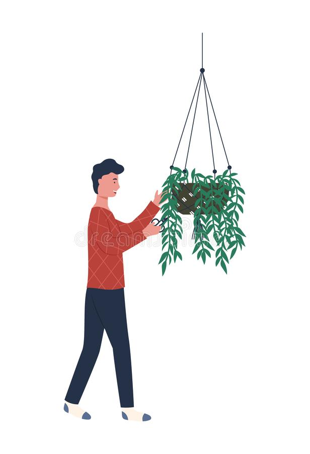 Male Caring for Plants Growing in Handing Pot. Plant with long wavy branches vector, man caring for houseplant in special container. Male in greenhouse isolated stock illustration