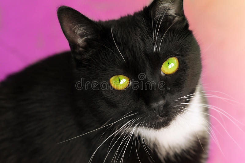 Download Male cat face stock photo. Image of curiosity, animal - 23437694