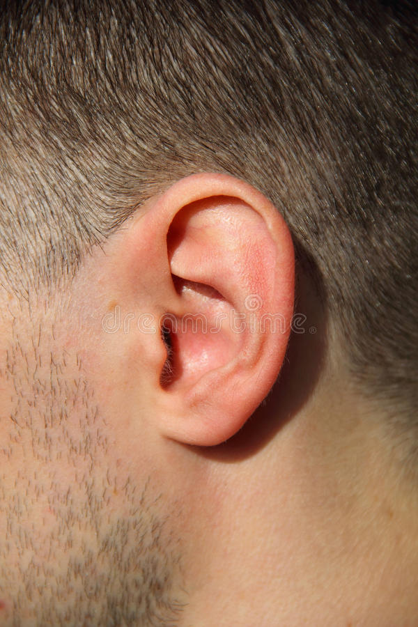 Male Ear. Close up photo of a human male ear stock photos