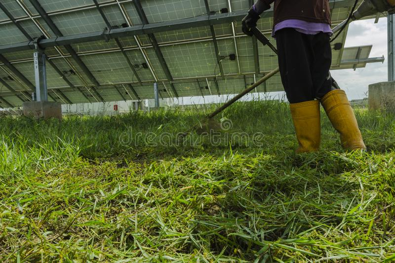 Male employees use lawn mowers to cut grass in the area of solar power plants stock photos