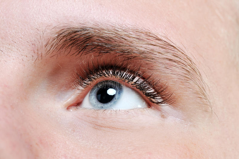 Download Male Eye Royalty Free Stock Images - Image: 29104339