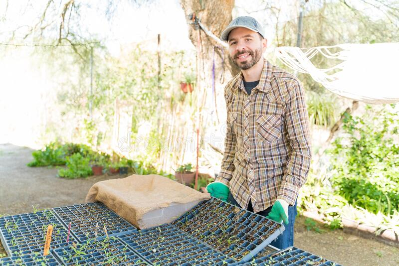 Male Farmer With Seedlings Tray At Farm royalty free stock photo
