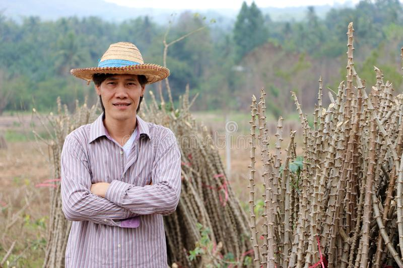 Male farmer standing and hugging chest beside the stack of  tapioca limb in the farm royalty free stock photography