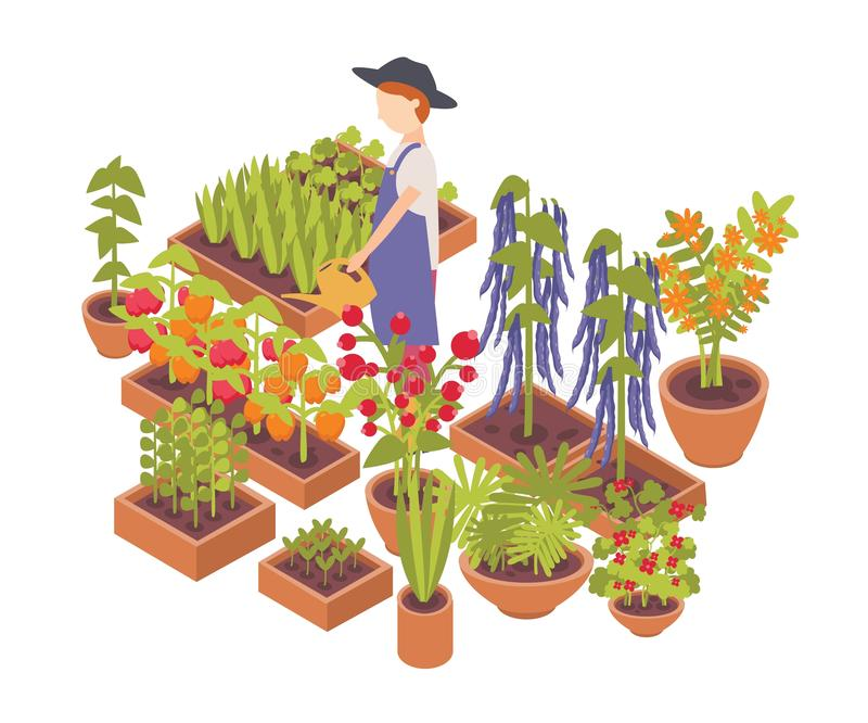Male farmer watering vegetables and flowers growing planters isolated on white background. Eco friendly farming, crops royalty free illustration