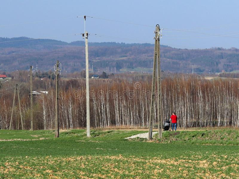 A male father walks in nature with a child in a children`s stroller near electric poles. Fields with young wheat and birch forest. stock photo
