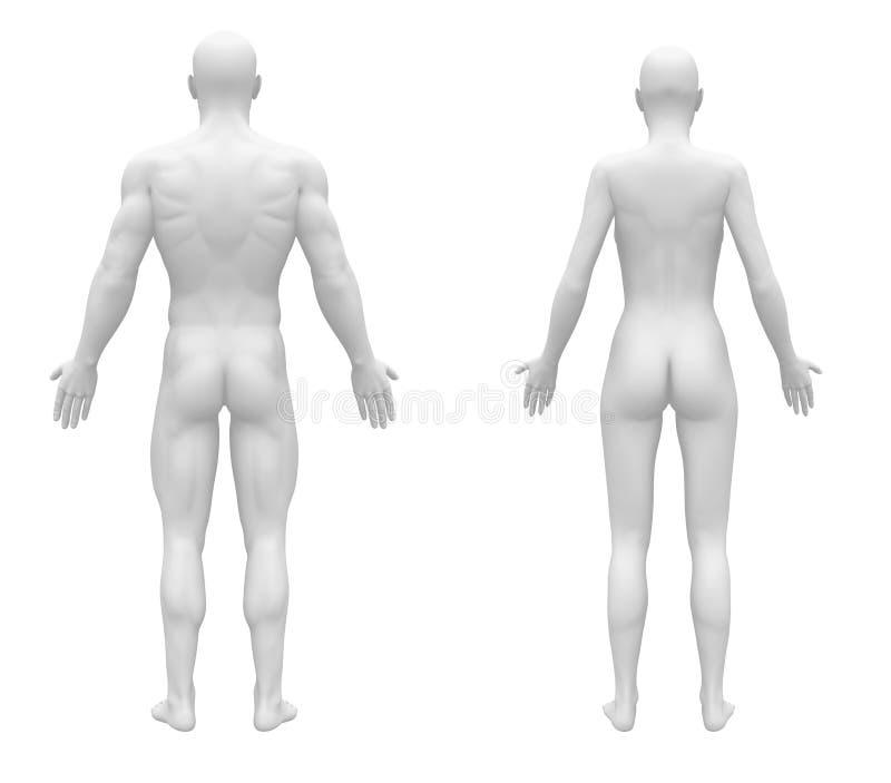 Male Female Blank White Back View stock illustration