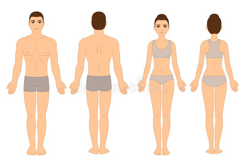 Male and female body chart royalty free illustration