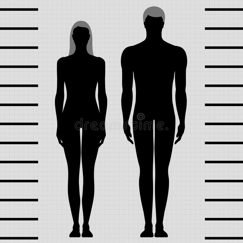 male and female body templates stock vector