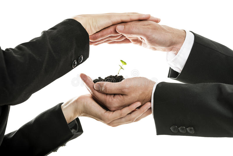 Male and female business hands holding and protecting new green. Sprout in a pinch of soil. Conceptual of environmental awareness and business start up royalty free stock photos
