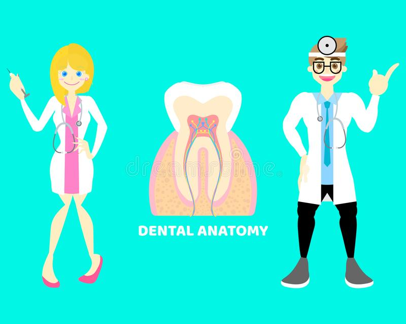 Male and female doctor dentist with dental teeth, internal organs tooth anatomy body part nervous system. Background, illustration cartoon flat character stock illustration