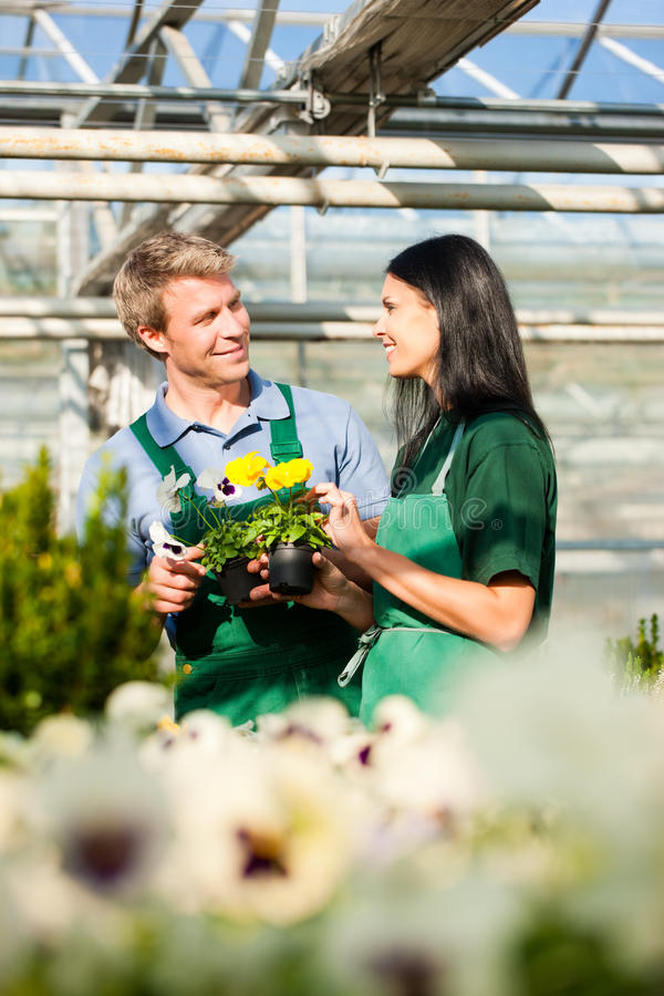 Download Male And Female Florist Or Gardener In Flower Shop Or Nursery Stock Photo - Image: 33421264