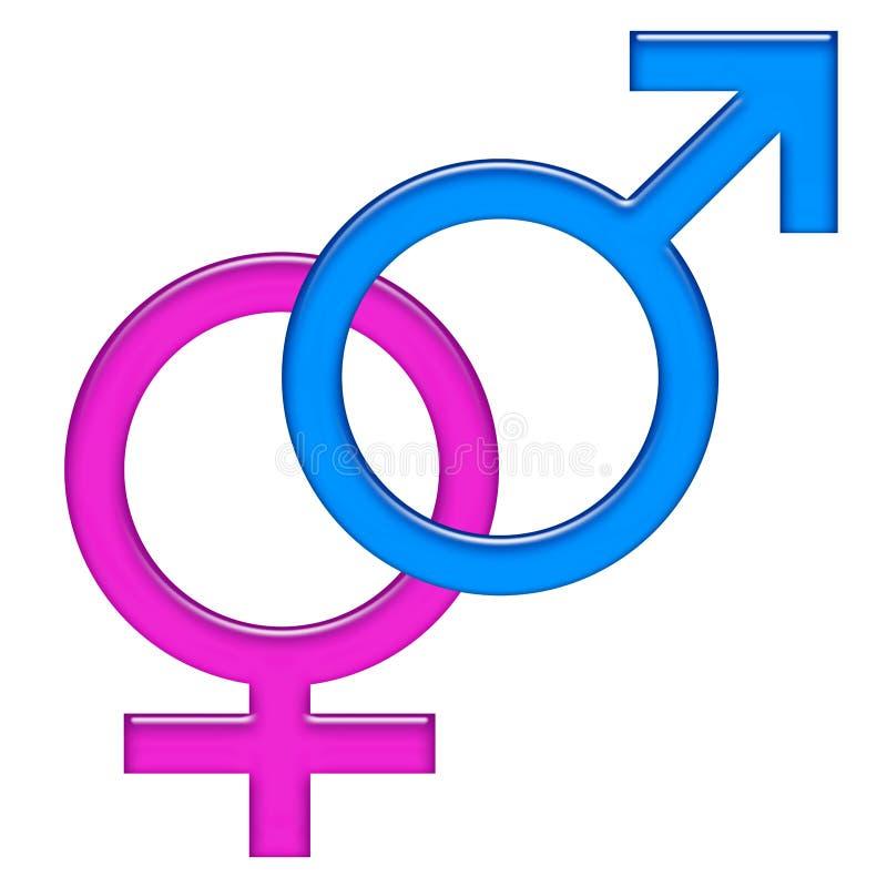 Male and female gender symbols icon vector illustration