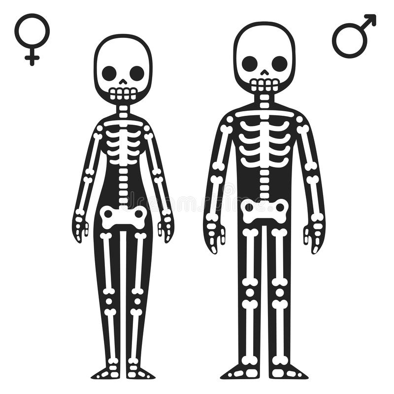 Male and female skeletons royalty free illustration