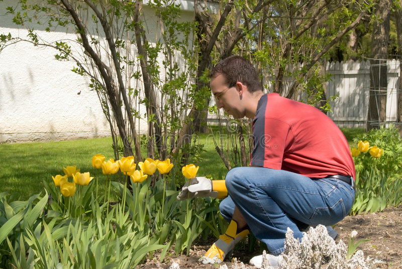 Male Gardener royalty free stock photo