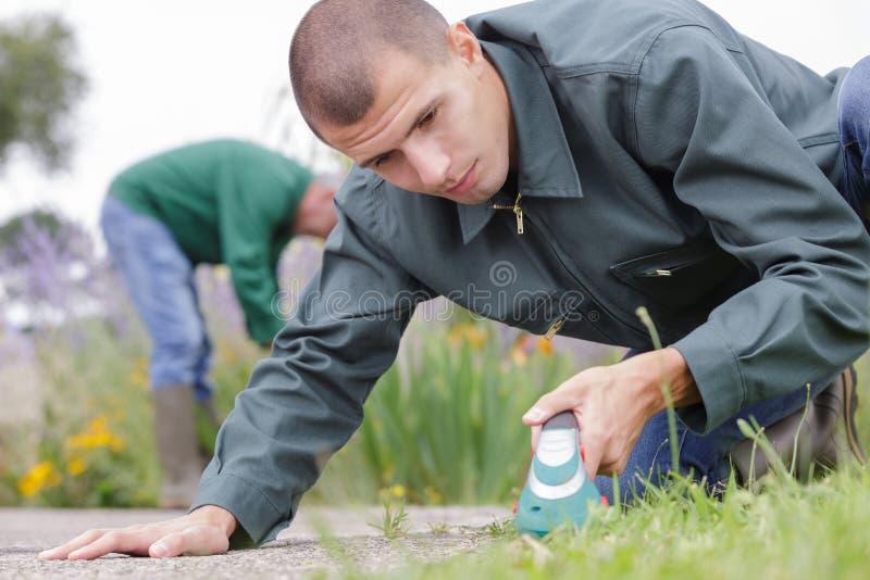 Male gardener focused at work. Gardener royalty free stock photo