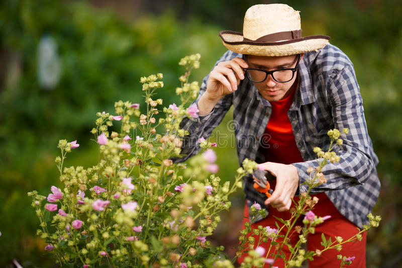 Male gardener in hat and glasses cut bushes plants stock image
