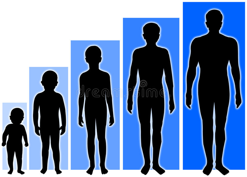 Male Growth Stages royalty free illustration