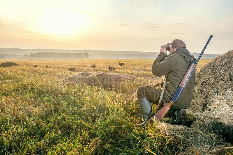 Male with a gun and binoculars at dawn. Hant on birg grouse royalty free stock image