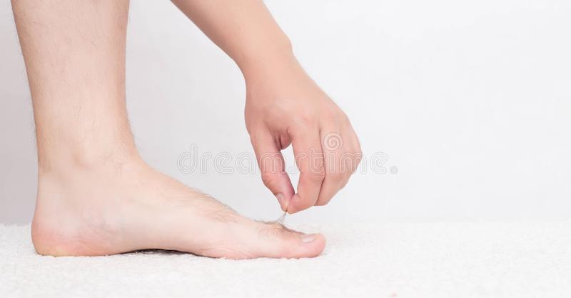 Male hair on toes and legs, white background, concept of hair removal on the skin, copy space. Depilation stock image