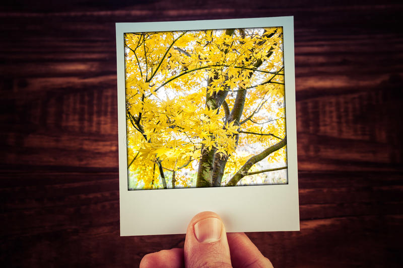 Male hand holding polaroid photograph of yello Maple tree in autumn with copy space. Travel memories of good time scrapbooking. stock photos