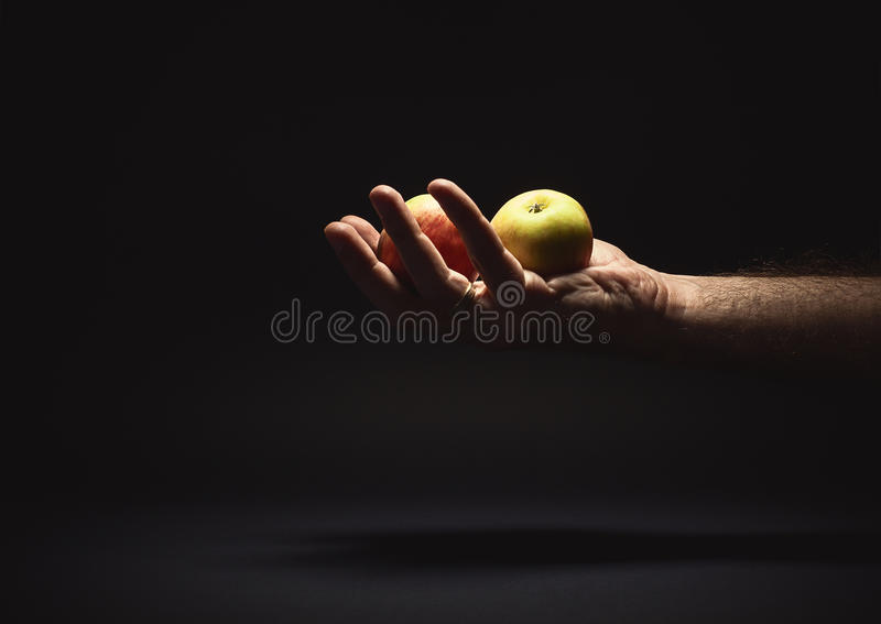 Male Hand Holding Two Apples royalty free stock images
