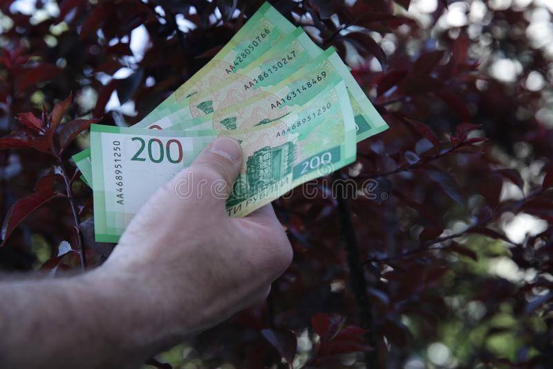 Male hand holds new Russian banknotes Two hundred rubles on the background red tree royalty free stock photos