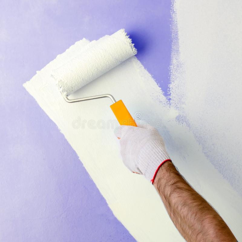 Male hand painting wall with paint roller. Painting new apartment renovating with purple color paint stock photos