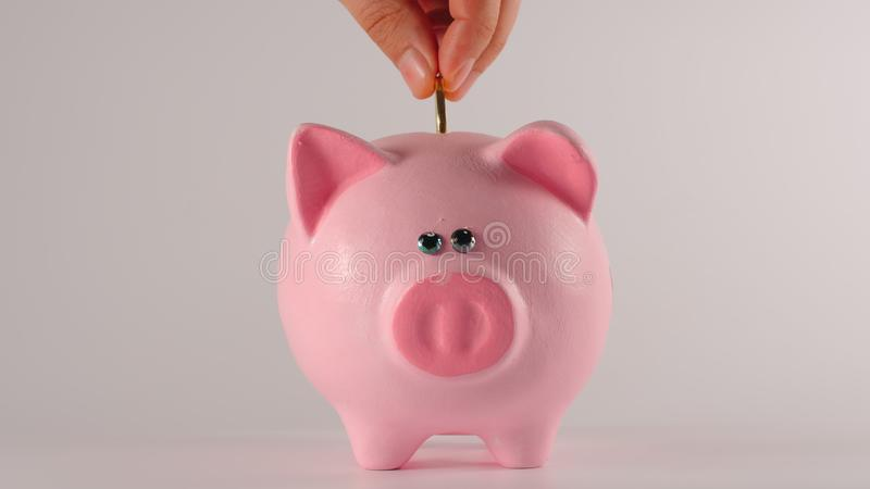 Male hand throws golden coin into a pink piggy moneybox stock photo