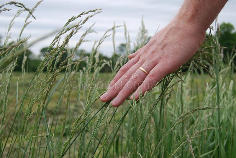 Male hand touching grass stock photography