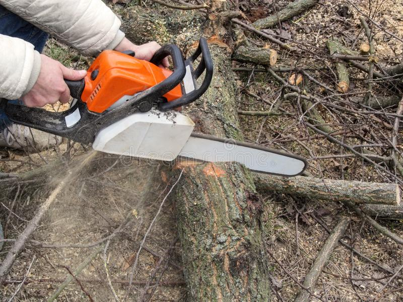 Male hands sawing a tree trunk on the ground, and sawdust flying from chainsaw. Cutting trees for firewood, a man with a chainsaw stock photos