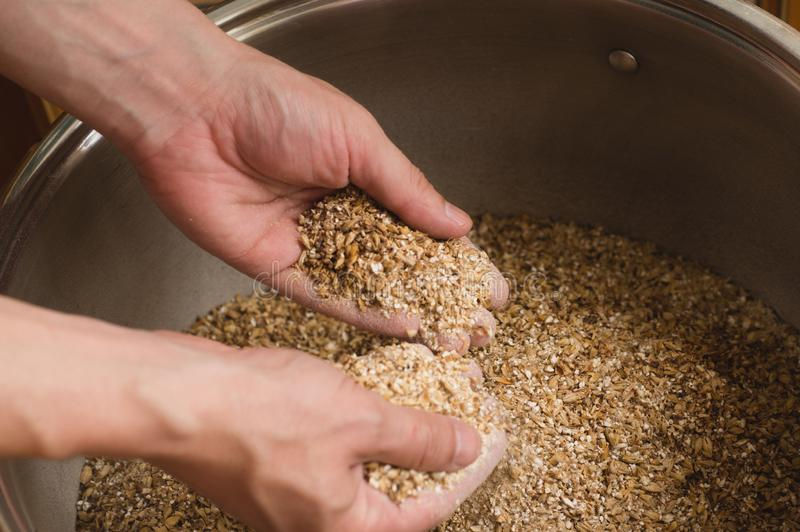 Male hands from which ground malt pours out. good attitude to craft. Craft beer brewing from grain barley pale malt in process. stock photography