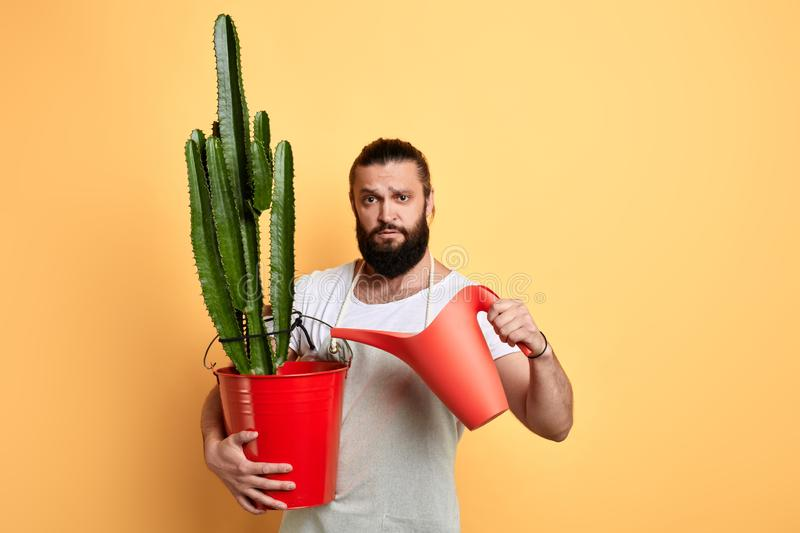 Male handsome bearded florist watering house plant on yellow background stock photos