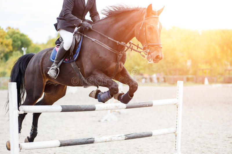 Male horse rider jumps over hurdle on competition royalty free stock photos