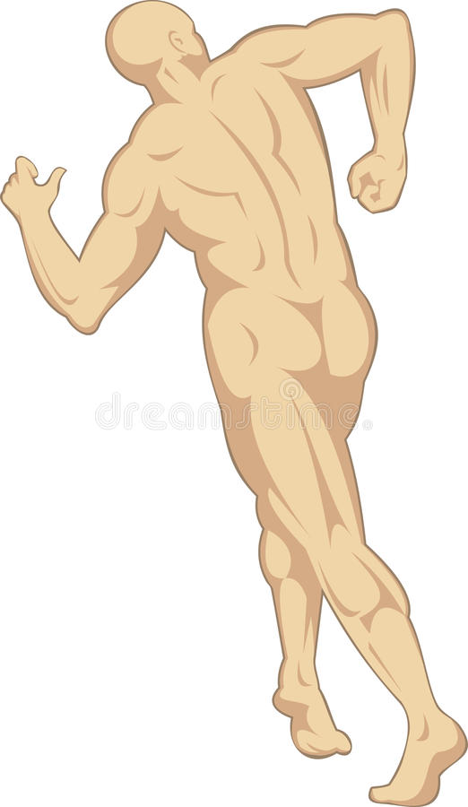 Download Male human anatomy rear stock vector. Image of isolated - 10069419