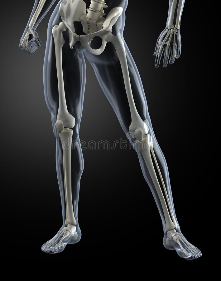 Male Human Legs X-ray Royalty Free Stock Images