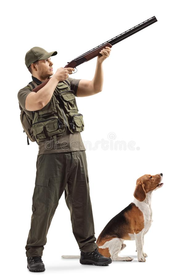 Male hunter aiming with a shotgun upwards with a beagle dog next to him royalty free stock images