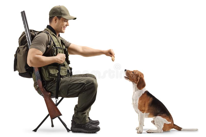 Male hunter sitting on a chair and giving a biscuit to his beagle hunting dog royalty free stock images